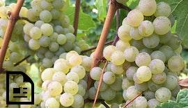 Sichere #Stromversorgung für die Weinpresse