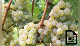 Sichere Stromversorgung für die Weinpresse
